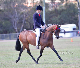 "Leah Walsh's ""ACM Sophia"" was a class winner in the pony ring, ridden by Michael Glenn."