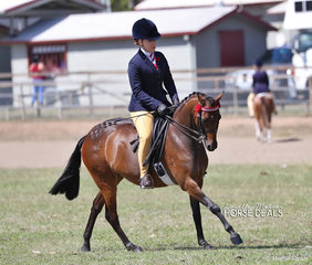"Class winner in the Pony ring ""KT Miss Molly"" owned by Karen Townsend and ridden by Rebekah Bennett."