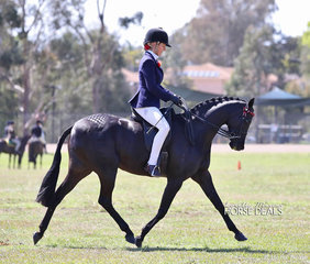 "Champion Large Pony ""Nottingham Love Song"" and Renae Dorney."