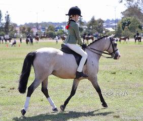 "Sarah Amundsen riding ""Athono Milo"" to win the Ridden Buckskin under 14hh class."