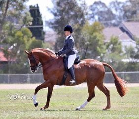 "Working out in the Show hunter Hack ring is Stephanie Chenery and ""Roxleigh Liberty"""