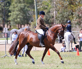 "Winner of the Ridden Arabian Derivative Gelding over 14hh ""Ramana Park Cartier"" and Nicole Groom."