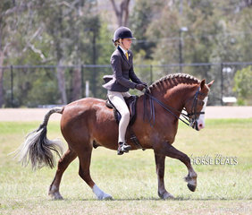 """Supreme Champion Ridden Breed of the Show went to the Champion Ridden Cob """"Kenda Park Fancy That"""" exhibited by Jodi and Kate Sewell."""