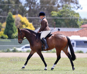 """Winner of the Open Show hunter over 15hh not exceeding 16hh """"Recipe Beach"""" ."""