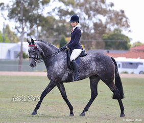 "Winner of the Champion Small Hack and Supreme Show Horse ""Set In Diamonds"" ridden by Courtney Cremasco for Toni Ambrose."