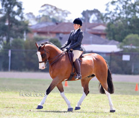 """Laura Northover and """"NV Hudson"""" won the Adults Show Hunter over 15hh class."""