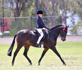 """""""Springfield Seattle"""" and Holly Balfour-Brown won the Small Gallloway Championship."""