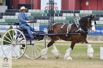 The Taylor and Talbot nomination, 'McMurchie Blair'  driven by Benton Taylor, won the class for Heavy Show Harness Horse Driven in a Non Traditional Vehicle and was declared Champion Clydesdale in Harness.