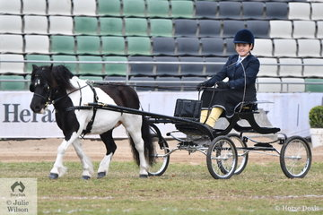 The Pengelly and Buckley nomination, 'Green Valley Krypton' won the class for Child's Pony Driven in Single Harness 14hh and Under.