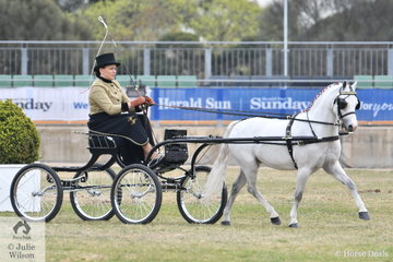 Melanie Mantel drove her, 'Alcheringa Sailor' to take second place in the class for Pony Driven in Single Harness 11-12hh and took out the award for Reserve Champion Pony 12hh and Under.