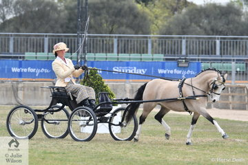 On the last day of the 2018 Royal melbourne Show, Vaness Wells drove her charming, 'Moondyne Lucy Lockett' to third place in the class for Pony Driven in Single Harness 11-12hh.