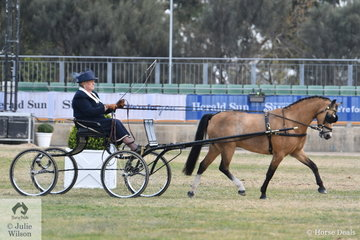 Marjorie Walter drove her , 'Storm View Poet' to sixth place in the class for Pony Driven in Single Harness 11-12hh.