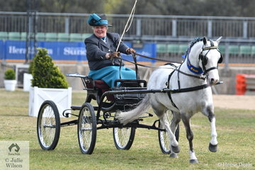 Julie Abrehart drove her, 'Eagle Park  Starburst'  to win the class for Pony Driven in Single Harness and went on to claim the award for Champion Harness Pony 12hh and Under.