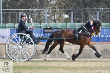 The Murroka and Carbery Estate nomination, 'Miriam Two' driven by Matthew Marriott won the class for Medium Show Harness Horse Driven in Non Traditional Vehicle and was declared Champion Show Harness Horse.