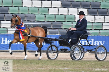Chris Lawrie drove his own and Anne Lindh's nomination, 'Hudson Wildcard' to win the class for Hackney or Part Bred Hackney Pony Driven in Single Harness Not Over 14hh and was declared Champion Part Bred or Hackney Pony 14 hh and Under.