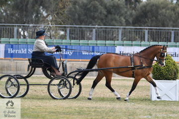 Melanie Mantell drove her 'Amarah Park Targo' to take third place in the class for Pony Driven in Single Harness 12-13hh.