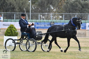 Andrew James drove his own and Corinne Collins', 'Roseair Manikato' to win the class for Pony Driven in Single Harness 12-13hh and went on to be declared Champion Harness Pony 13-14hh.
