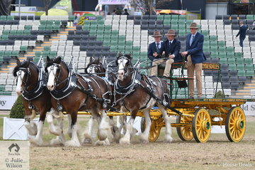 The AT Marriott and Family's famous Team of Four Clydesdales, 'Pride, Prince, Phillip and Peta' won the class for Four or More Heavy Delivery Turnout.