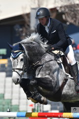The 2018 Royal Melbourne Show started on a perfect spring day with the main arena given solely to showjumping for the next four days. Brook Dobbin riding Wendy Kendell's, Leopoldo MVNZ jumped a double clear round in the Group C event to take fourth place.