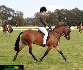 Striding out in the Secondary Show Hunter all the way from Queensland was Rose-Air Diplomat with aboard Lexie Armstrong.