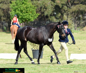 Kaida MacDonald trots out Rathowen Soho in the led phase of the Primary Show Horse on day one of the 2018 Interschool National Championships.