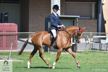 The 160th Great Show of Seymour attracted professional riders and those just wanting to have a day out with their horses and ponies. Josh Clarke who fits in to the first category rode , 'SLM Pretty Woman' to win the class for Open Hack 15-15.2 in Ring 3.