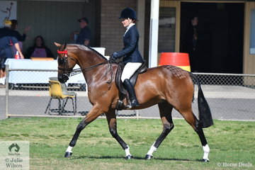 Well known and successful showing rider, Courtney Bird rode, 'Belarusian' to second place in the Ring 3 class for Open Hack 15.2-16hh on a beautiful Spring morning in Seymour.