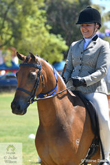 Lynda Hayes rode Nicole Parsons', 'Class Orlando Bloom' to win the Ring 3 class for Show Hunter Pony 13-14hh.