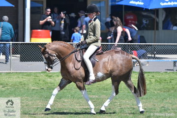 Minna Baxter rode her delightful, 'Imperial Jester' to win the ring 3 class for Show Hunter Pony 12-13hh.