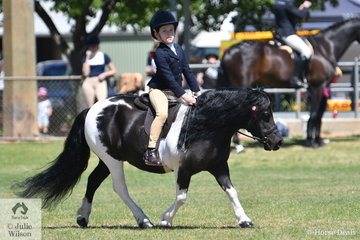 Annique Smith rode , 'Loyal Park Stella' to win the Ring 2 class for Ridden Shetland.