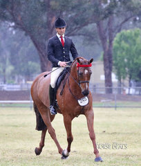 """Belinda Scanlon's """"Alkyra Conquest"""" ridden by Matt Snell had a successful show. They were the Reserve Champion Newcomer Hack, Champion Preliminary Hack and went Top 10 in the Large Saddle Horse of the Year event."""