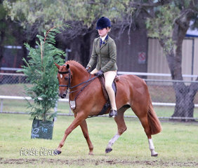 """Piper Hodge rode Tricia Pauling's """"Paulgren Park Flirtatious"""" to a Top 10 placing in The TABLELANDS SHOW HORSE & PONY ASSOCIATION INC. Large Show Hunter Pony event. Earlier in the Show the combination were the winners of the Young Show Hunter Horse 4 Yrs n/e 14h event."""