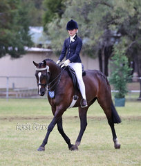 """Eloise Clare of Dural riding """"Mains Picture Perfect""""  in The DURAL STOCK FEEDS Rider of the Year 12 & under 15 years event."""