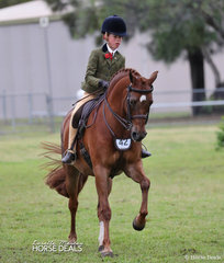 """Olivia Carter riding """"NSJ Town Crier"""" to a Top 10 placing in The TABLELANDS SHOW HORSE & PONY ASSOCIATION INC. Large Show Hunter Pony event."""