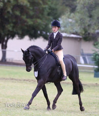 """Coco Gunther and """"Oakvale Strolling Minstrel"""" placed Top 10 in The TABLELANDS SHOW HORSE & PONY ASSOCIATION INC. Large Show Hunter Pony of the Year event."""
