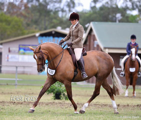 """Jean Hull riding """"I Love Lucy""""  to a Top 10 placing in The WALFAM INVESTMENTS Small Show Hunter Hack of the Year event."""