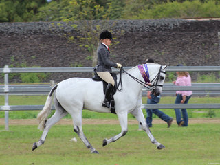 Champion Hunter Hack Dicavali Royal Gustav exhibited by Lindsey Blanch