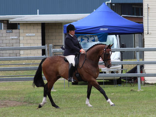 Reserve Champion Ridden ANSA Runway exhibited by Megan Perrin