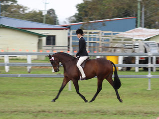 Champion Ridden ANSA Tremayne True Moment exhibited by Charlee Anthony