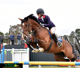 Former Olympian and star of the hit series Jump Off; Vicki Roycroft competes Dynamite Bay in the first round of the Futurity Championship at the NSW State Show Jumping Championships.