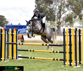 Ally Lamb's Poppy, tries her absolute heart out in the Open 1.10m, clearing all obstacles with ease at the NSW State Show Jumping Titles held in Canberra..