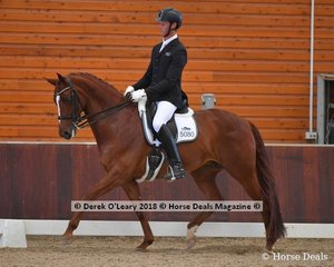 Woodside Lady Loxley ridden by David Mckinnon placed 2nd in the Advanced Freestyle with a score of 73.275%