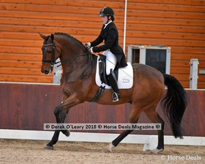 Freedom Cridden by Sidney Hoffman  placed 4th in the Advanced Freestyle with a score of 71.733%