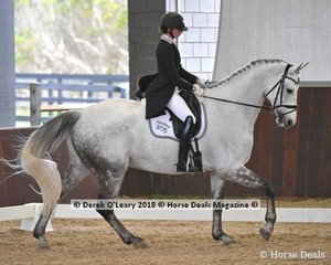 Free Cloud ridden by Shanon McKimmie in the FEI Advanced Freestyle