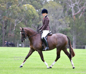 """""""Catwalk Angel"""" and Tracy Callus, class winners in the Show Hunter Galloway ring."""