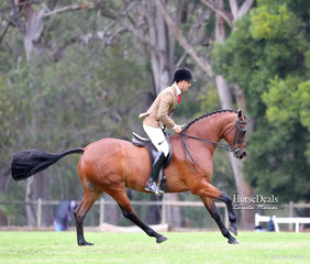 """Jess Campbell's """"Milwarrah Martini"""" was ridden by Matt Snell to win Champion Show Hunter Galloway & was Supreme Show Hunter."""