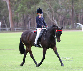"""Champion Small Galloway and Reserve Champion Ridden Riding Pony """"Springfield Seattle"""" and Holly Brown."""