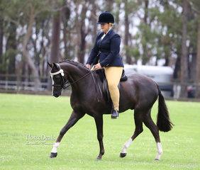 "Reserve Champion Ridden Australian Saddle Pony ""Marena Royal Flair"" exhibited by Amanda Williams."
