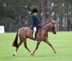 "Lachlan Colquhoun riding ""Yartarla Park Louis Vuitton"" to win Champion Ridden Australian Saddle Pony."