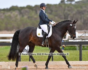New World Winston ridden by Kendal Measroch in the Medium 4.3